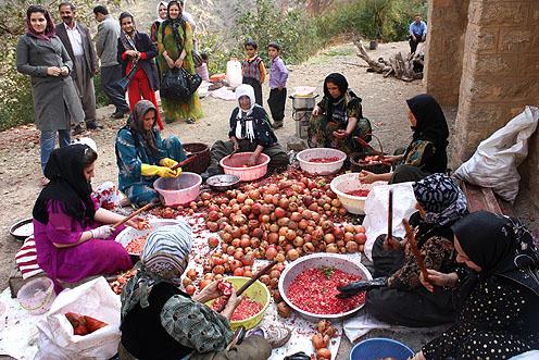 آیین رب انارگیری در روستای تاریخی هجیج - شهرستان پاوه