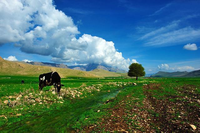 بی ابر نام روستایی در استان کرمانشاه