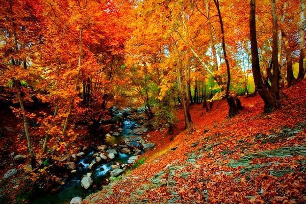 طبیعت پاییزی شهرستان صحنه