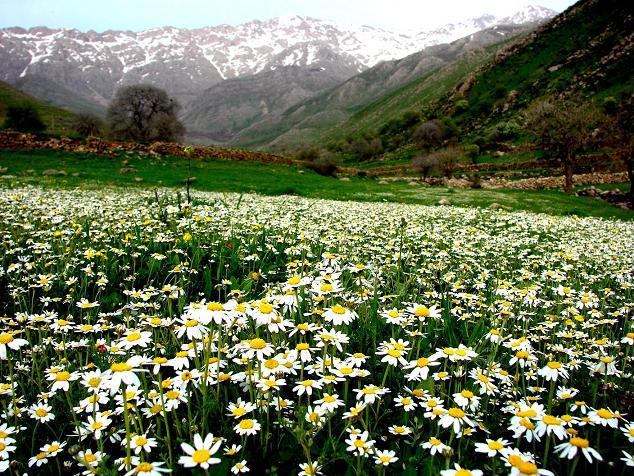 طبیعت پاوه - شهرستان پاوه