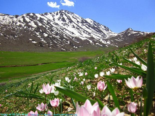 کوه امروله - شهرستان کنگاور